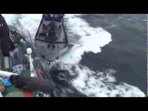 Sea Shepherd boat clashes with Japanese whaling ship