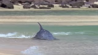 Hydroplaning Dolphins BBC Planet Earth
