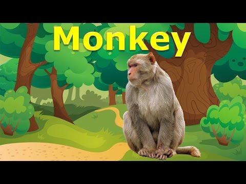 Con vật và tiếng kêu   dạy bé học nói qua hình ảnh con khỉ con gấu   dạy tiếng anh cho trẻ em