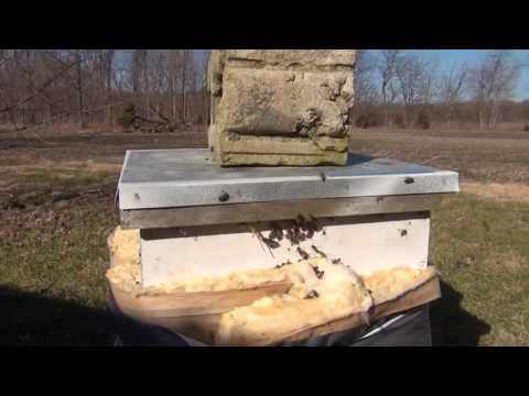 Beekeeping: Checking On Bee Hives In The Winter