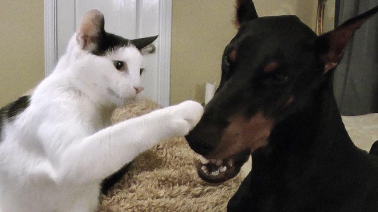 Youtube Dog Bringing Cat Home