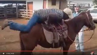 Recopilación de fallos a caballo