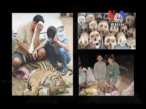 Wildlife Alliance Reduces Illegal Trade in Cambodia អង្គការWildlife Alliance