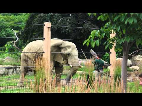 Cleveland Metroparks Zoo 2013