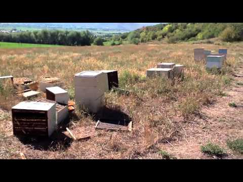 To Bee Or Not To Bee - A Year in the Life of a Beekeeper