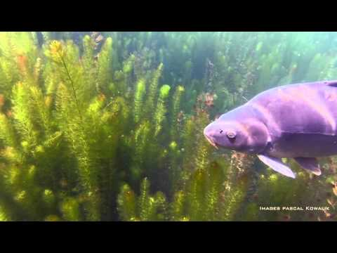 Carp Fishing - Technical Impact