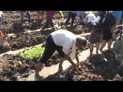 雲林新聞網-白頭翁的有機農業