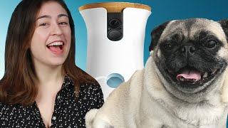 People Spied On Their Dogs With A Camera For A Day