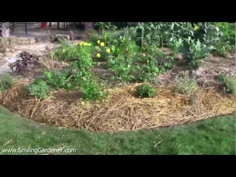Vegetable Garden Maintenance - It's Super Easy If You Plan It Right