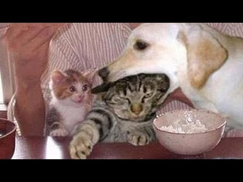 Funny dogs annoying cats - Cute animal compilation