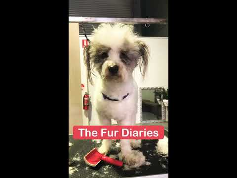DOG GROOMING | FUNNY CLIENTS COMPILATION #1