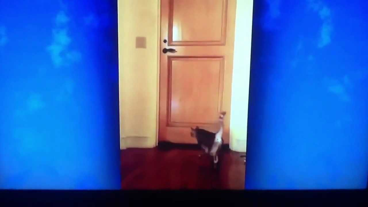 Vanna White Cat Stella Opens The Bathroom Door Youtube
