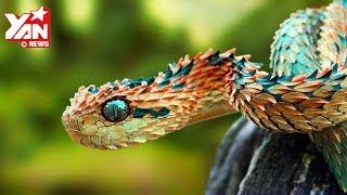 🔴 Top Các Loài Rắn Kỳ Lạ Đẹp Nhất Thế Giới