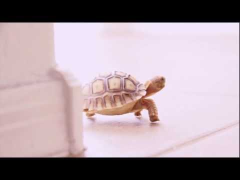 Canon 60D video test baby tortoise escape