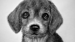 Como dibujar el pelaje de un animal