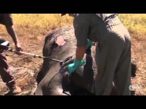 Rhino poaching 'relentless' in S Africa