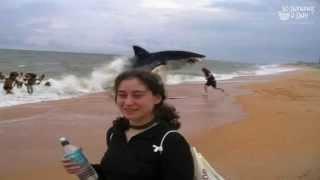 German Backpacker Shark Attack On Australian Beach : Real