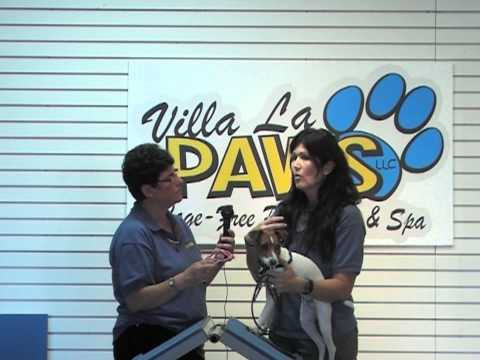 Villa La PAWS Canine Training Center presents Zen Dogs