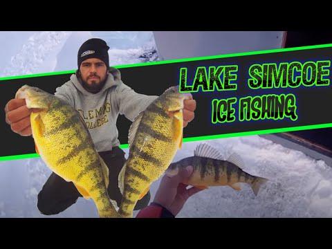 Lake erie jumbo perch fishing lake erie for Wisconsin ice fishing resorts