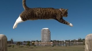 PURRKOUR - DIDGA taking cat parkour to a new level