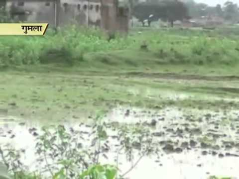 Rain brings relief to farmers in Jharkhand