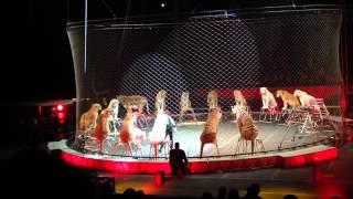 R.B. And B.B circus