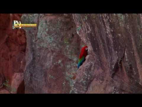 Buraco das Araras - Bonito - Mato Grosso do Sul