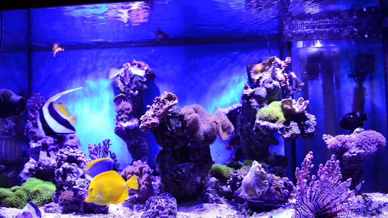 Saltwater aquarium youtube saltwater aquariums youtube for Youtube fish tank