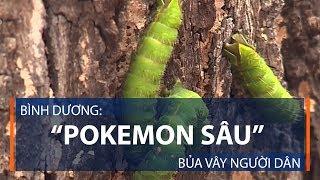 """Bình Dương: """"Pokemon sâu"""" bủa vây người dân   VTC1"""