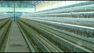 Agroexperiência Granja De Codornas