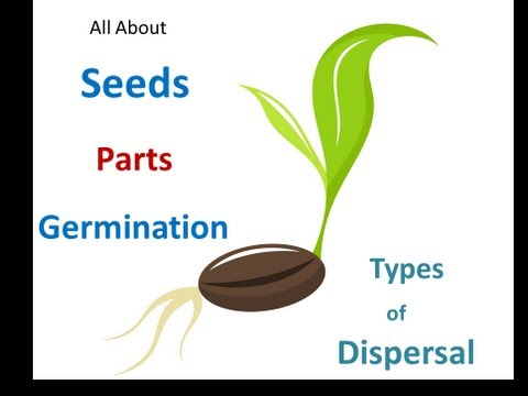 Seed parts ,Seed germination ,Seed dispersal for Kids