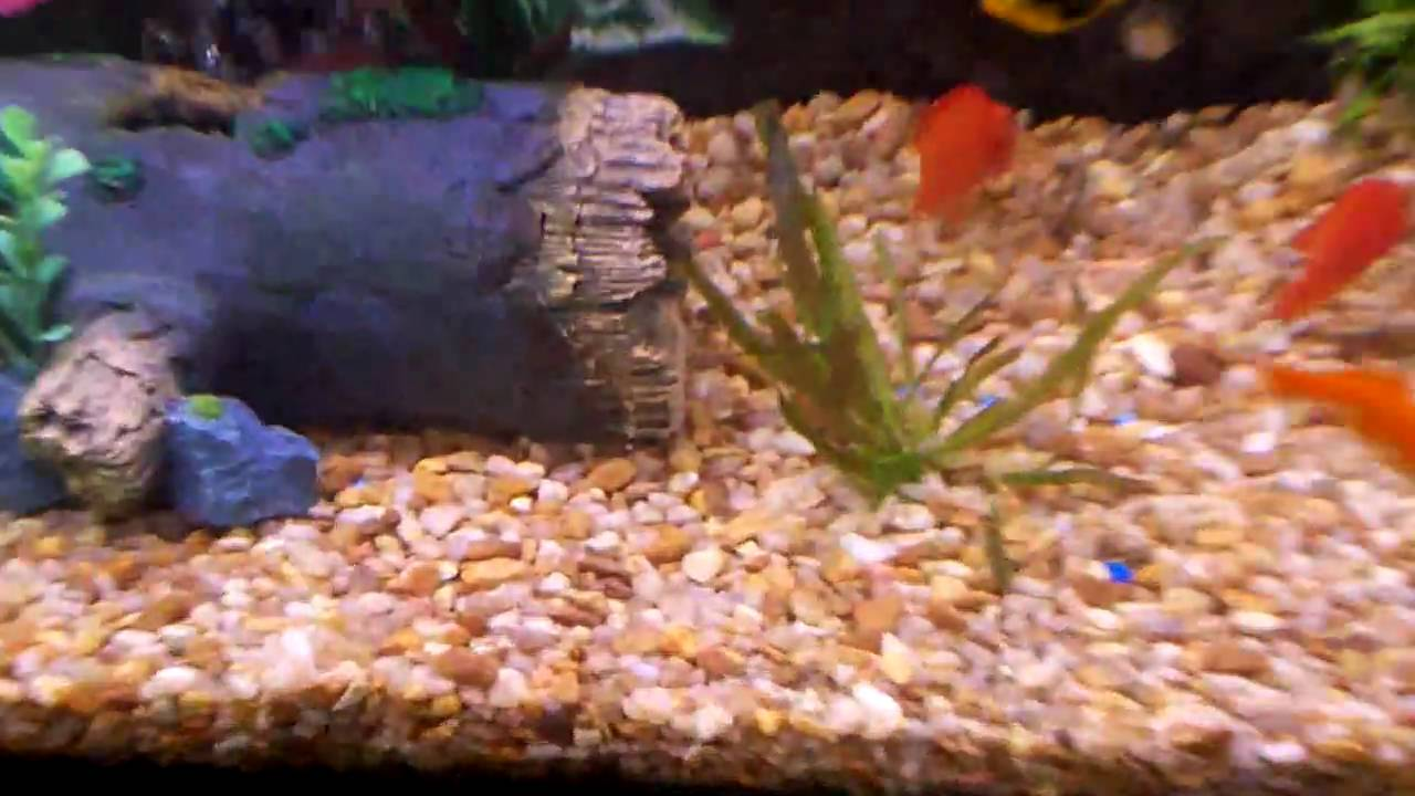 55 gallon tropical freshwater aquarium setup youtube for 55 gallon fish tank setup