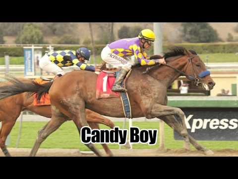 2014 Kentucky Derby Contenders and Betting Predictions