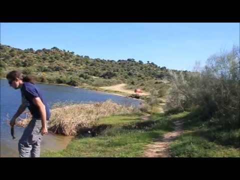 Pesca de Black Bass en el Embalse de Azutan