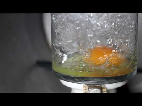 Egg in a Vacuum Chamber