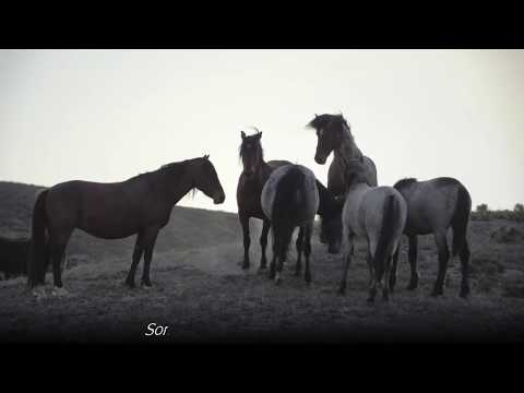 Wild Mustang Horse Birth In Utah Desert *GRAPHIC* Slide Show