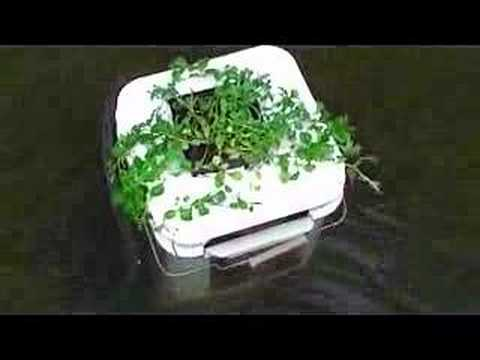Home Made Pond Skimmer With Water Plant Youtube