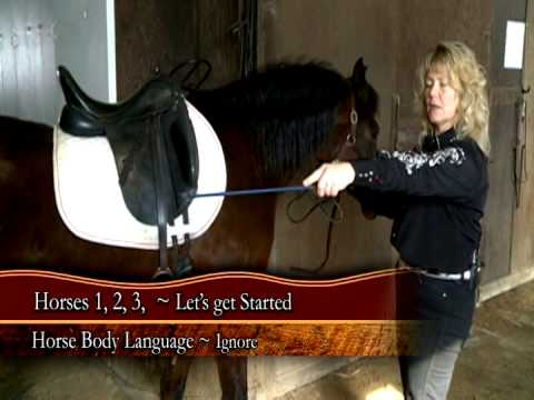 Evon Montgomery, HORSES 1, 2, 3 Horse handling and riding program. CALM, CONFIDENT, COLLECTED