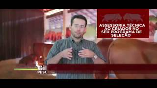 Senepol #ADICA – Ep. 04