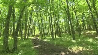 Wild Carpathia Documentar Travel Channel Despre Romania