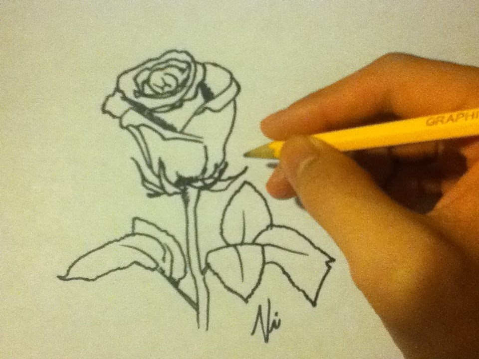 How to draw a rose easy on paper for beginners an open for How to draw a rose step by step for beginners