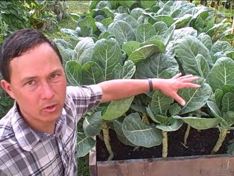 New York Community Garden Tour - Raising the Bar on Community Supported Agriculture