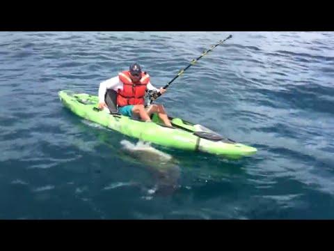 Shark Capsizes Kakak
