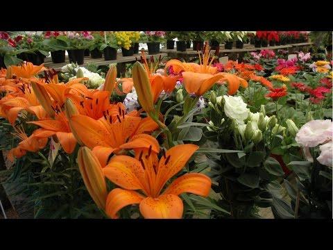 Curso Como Produzir Plantas Ornamentais - Mercado - Cursos CPT