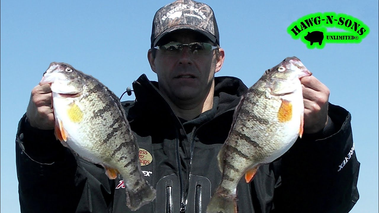 catch jumbo perch fishing ultimate secret exposed
