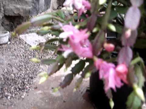 Enxerto de flor de seda