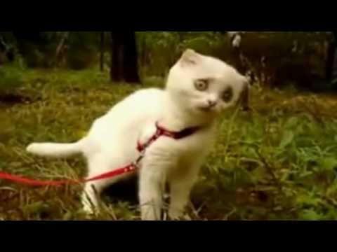 小貓咪被嚇到的表情 ~ 太經典了!