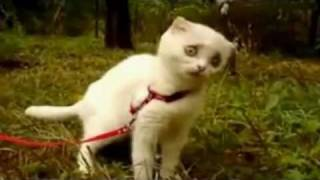 WTF Kitty!