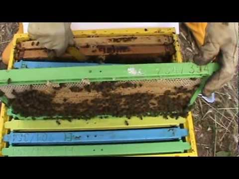 Μελισσοκομία 3_2.MPG