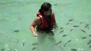 Ataque de tiburón bebé
